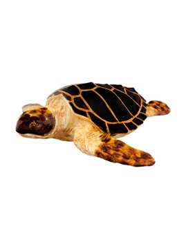 Picture of Large Turtle